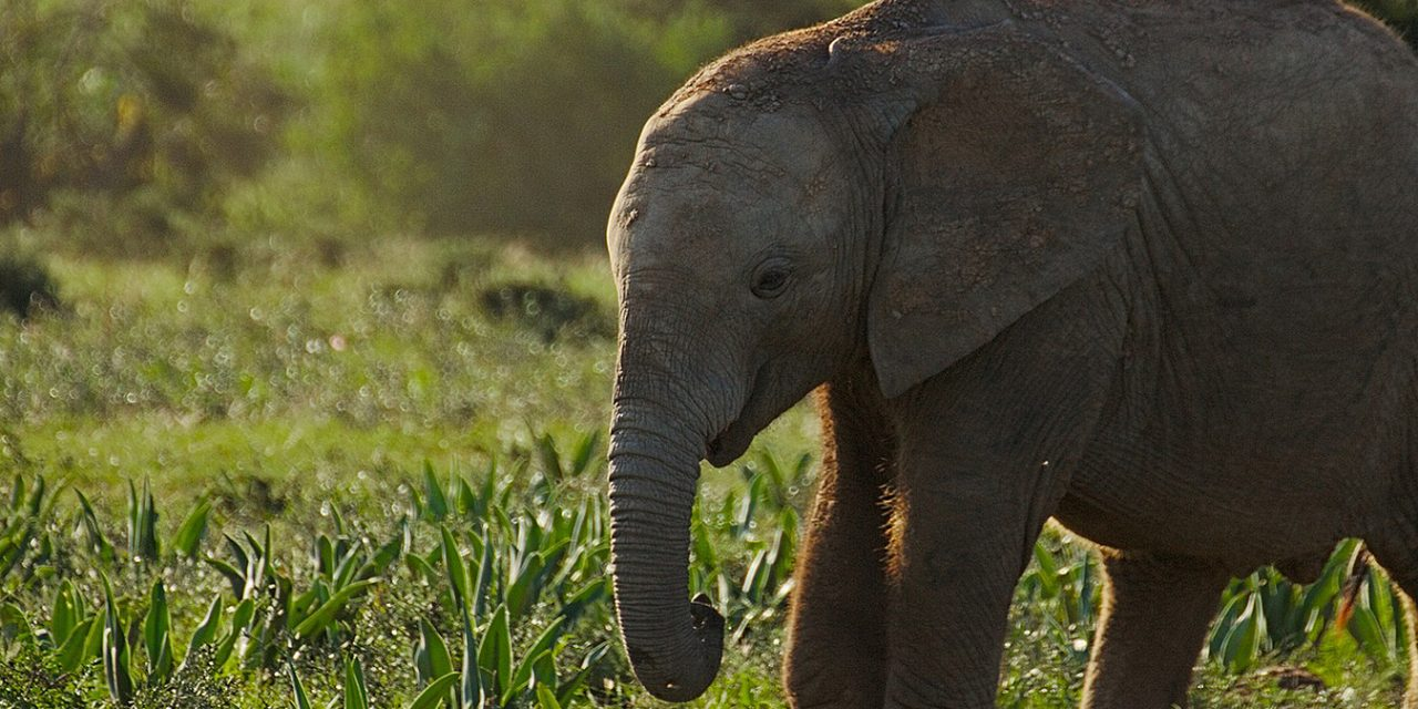 https://www.southafricaguidedtours.com/wp-content/uploads/2019/06/Addo-Elephant-Park-Tour_banner-1280x640.jpg