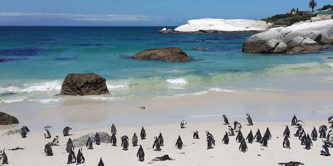 https://www.southafricaguidedtours.com/wp-content/uploads/2019/06/Full-Day-Cape-Peninsula_banner-1280x640.jpg