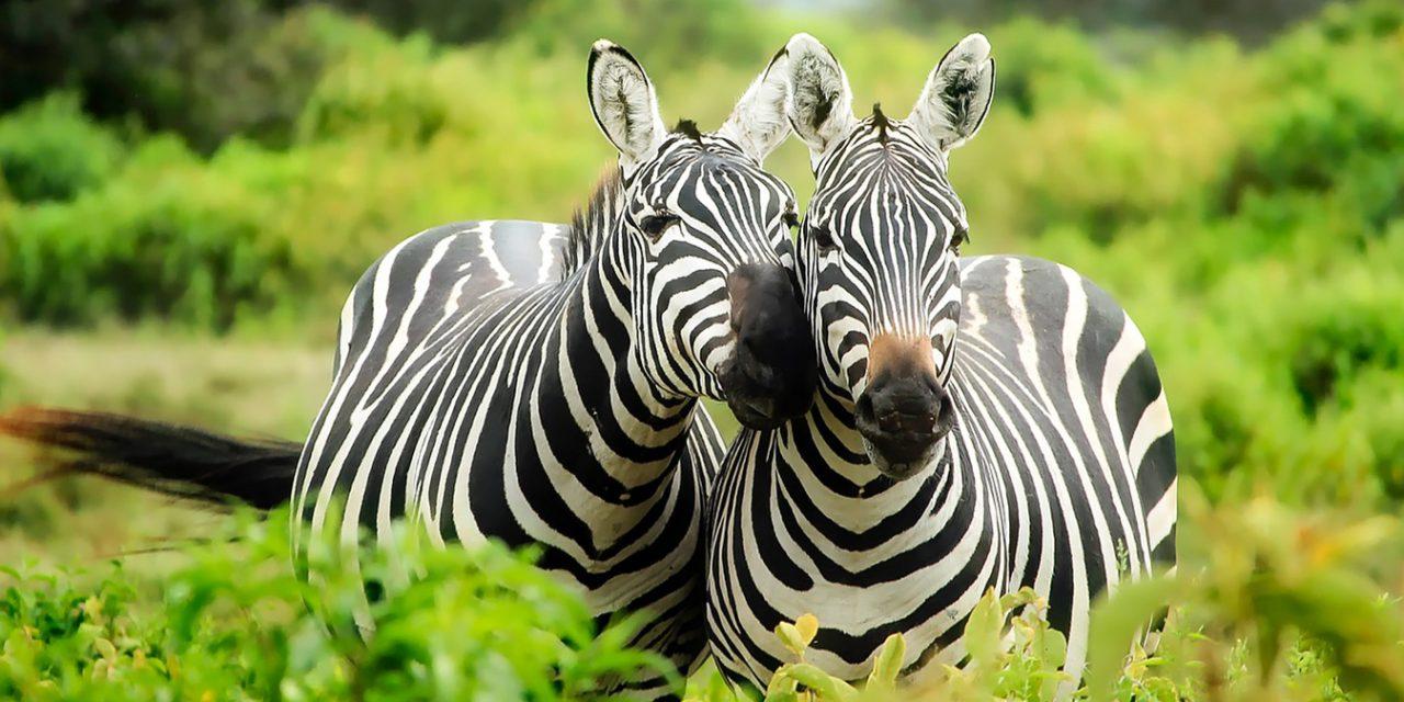 https://www.southafricaguidedtours.com/wp-content/uploads/2020/09/Kruger-Park-Open-Vehicle-Safaris_banner-1280x640.jpg