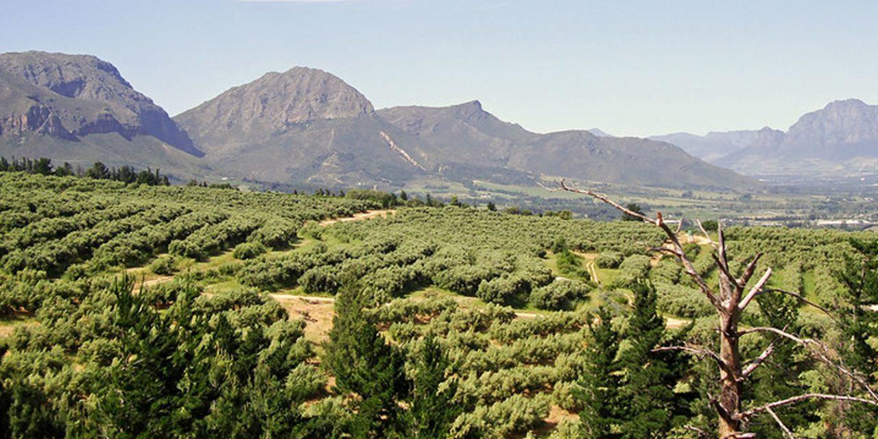 https://www.southafricaguidedtours.com/wp-content/uploads/2020/09/Winelands-bbq-braai-1280x640.jpg